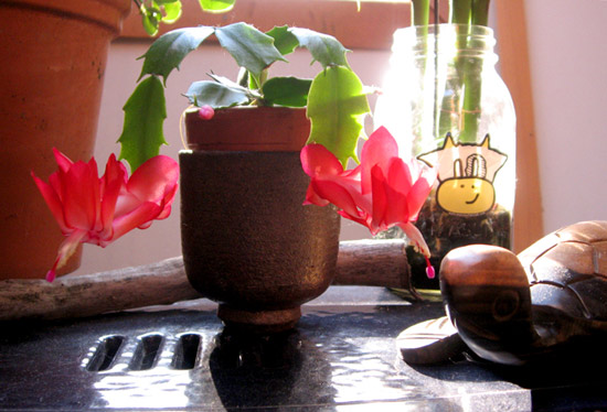 Red winter cactus