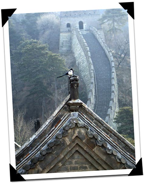 Bird on Great Wall Guard Roof