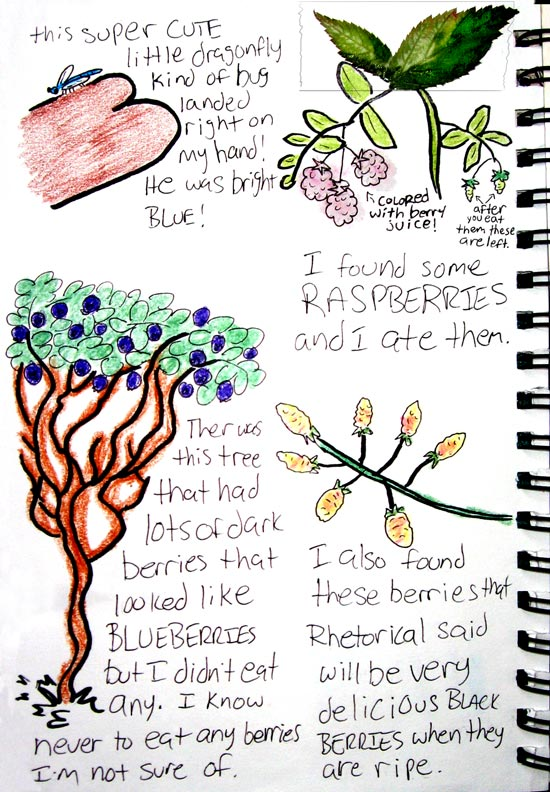 Nature Journal berries